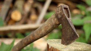 На Днепропетровщине «черные лесорубы» вырубают лесополосы - ФОТО