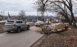 В Днепре упавшее дерево повредило автомобиль - ФОТО