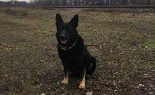 В Каменском пес помог найти воров - ФОТО