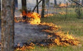 Под Каменским задержали поджигателя сухостоя (фото) - ФОТО