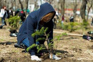 Один миллион деревьев в сутки: к экологической акции присоединится Днепропетровщина - ФОТО