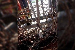 """В Днепре кафе """"атаковали"""" змеи (фото) - ФОТО"""