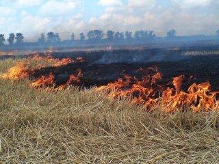 Каменчанам напоминают об опасности сжигания сухой травы - ФОТО