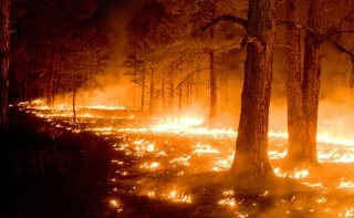 Этой весной в экосистемах Днепропетровщины произошло 620 пожаров - ФОТО