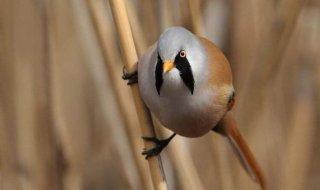 На Днепропетровщине заметили необычную птицу - ФОТО